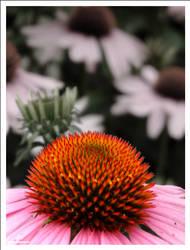 Spiky Heads by pweenie
