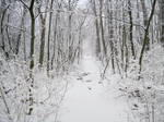 Forest Path in Winter 1