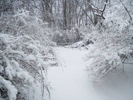 Forest Path in Winter 4 by Martut
