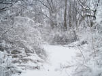 Forest Path in Winter 5