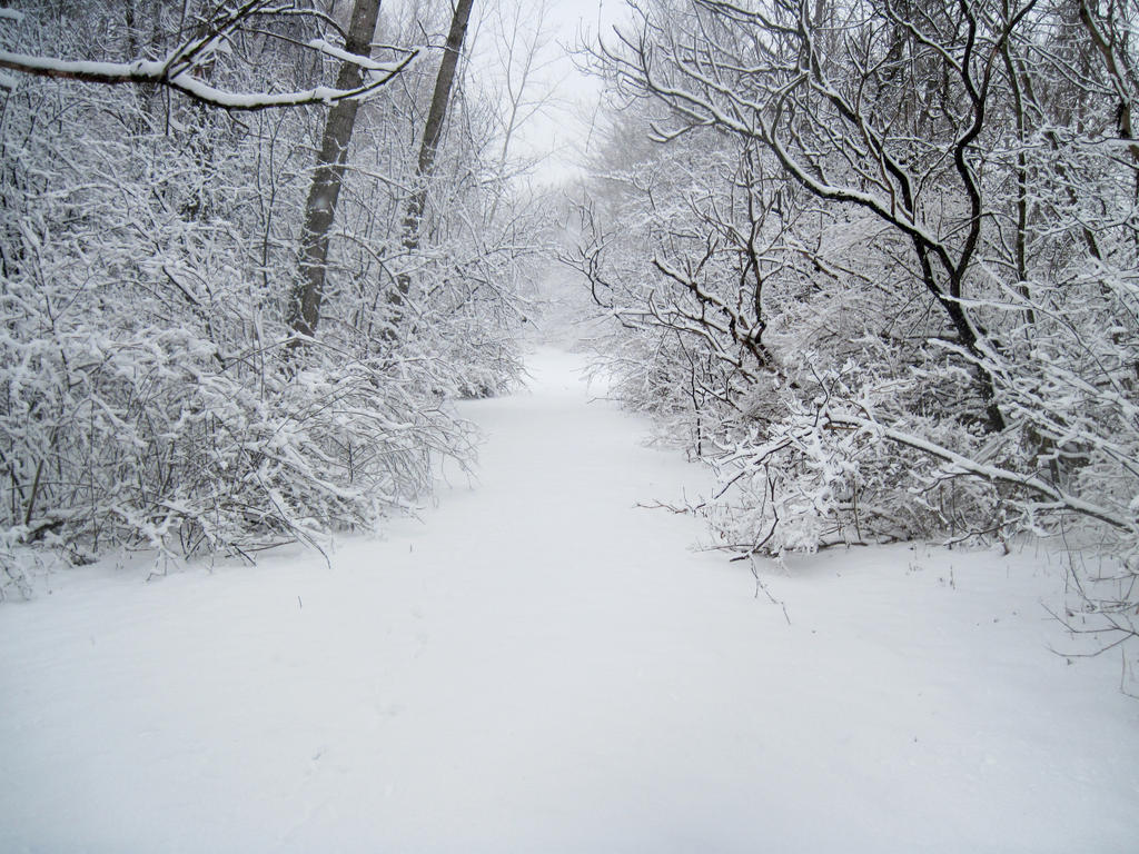 Forest Path in Winter 9 by Martut