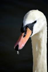 I may have bird flu...