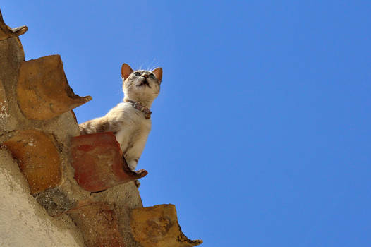 Cat on a hot (tin) roof...