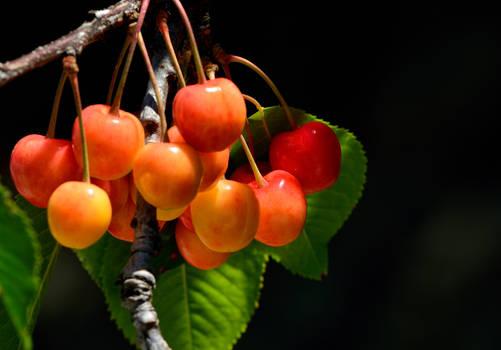 Cherry ripe...