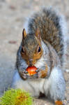 One autumn when the nuts were ripe...
