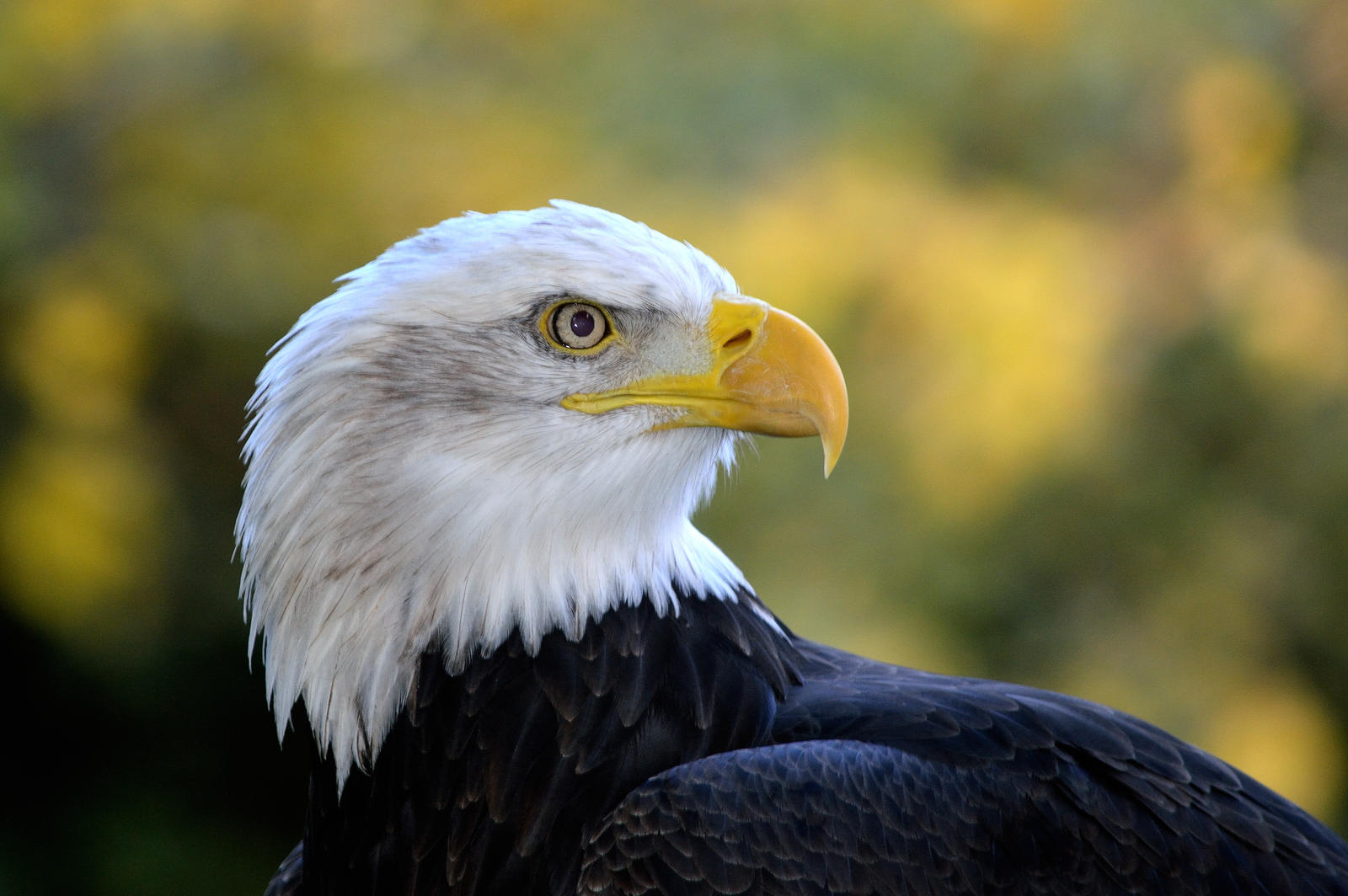 Eagle eyed... by cricketumpire