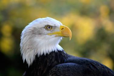 Eagle eyed...