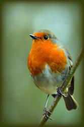 A little bird told me...