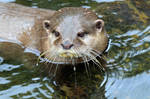 The otter I'm told...