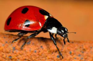 A tiny dot-to-dot delight... by cricketumpire