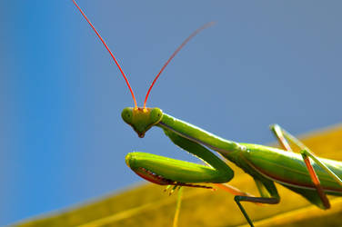 There's a mantis praying...