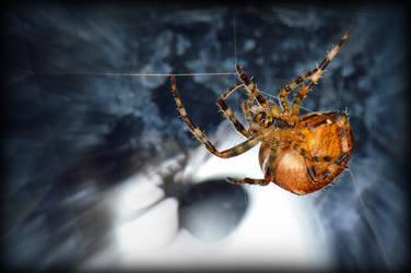 Halloween spider....