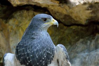 A bird when it seeks its prey...