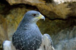 A bird when it seeks its prey... by cricketumpire