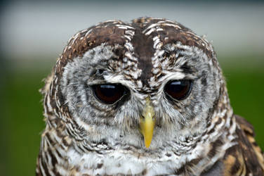 It's Owl who knows...