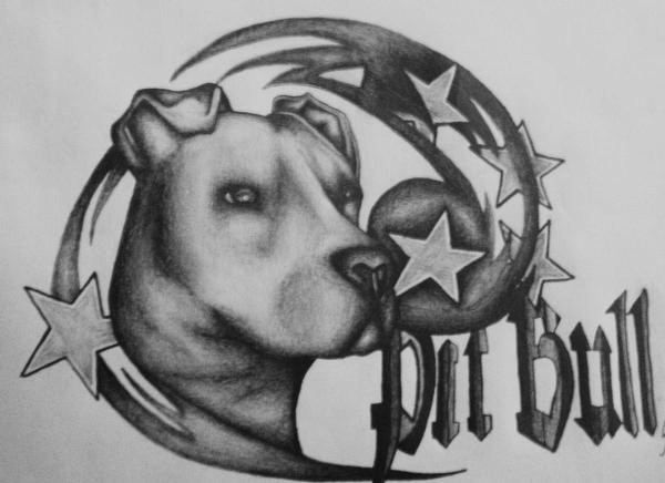 pit bull drawing by starlitefairy24 on deviantart. Black Bedroom Furniture Sets. Home Design Ideas