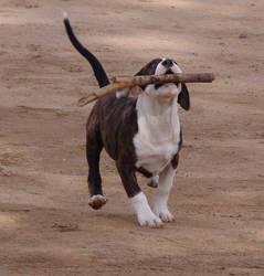 big stick, little puppy by starlitefairy24