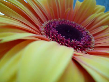Yellow Flower in Berlin