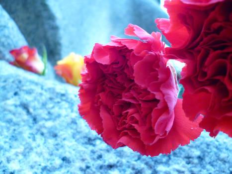 Red Flowers in Berlin