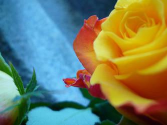 Another Berlin Flower