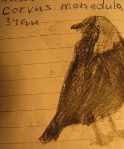 Corvus-monedula93's Profile Picture