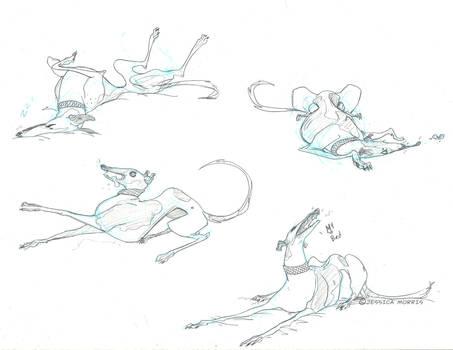 Muprhy the Greyhound