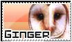 Ginger Stamp by RakPolaris