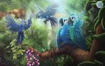 [com] Macaw Family