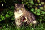Circus Cat by doredore