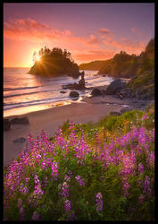 Beach Garden by MarcAdamus