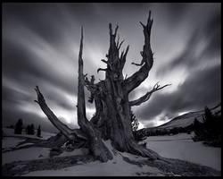 The Tree God by MarcAdamus