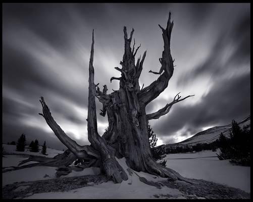 The Tree God