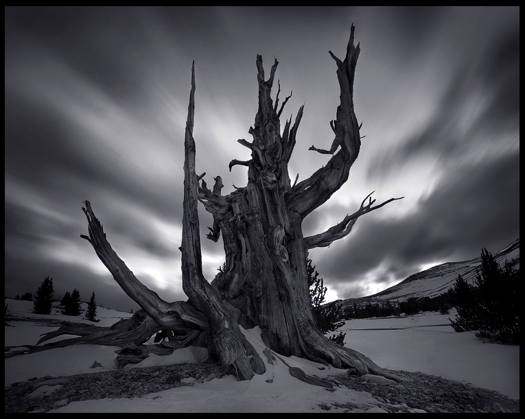 The Tree God by MarcAdamus