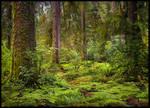 Rainforest Complexities by MarcAdamus