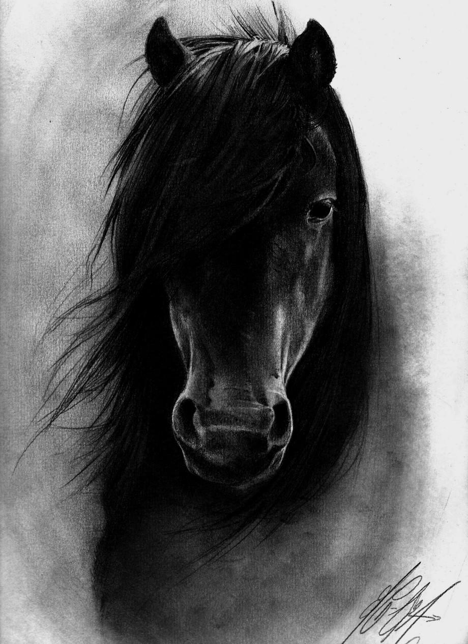 صور حصان أندلسي - صور للحصان الاندلسي