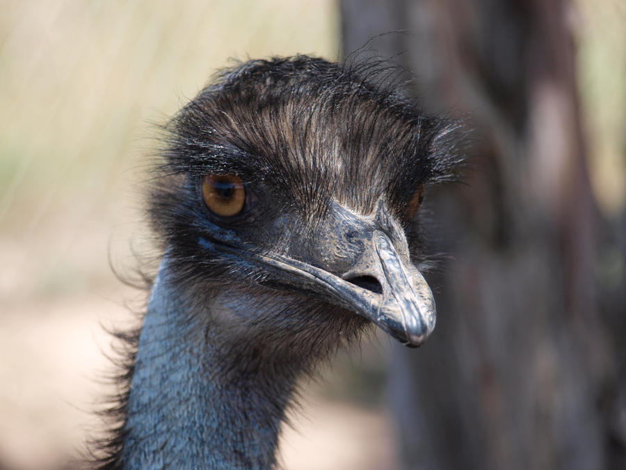 The Emu Eye by HempHat