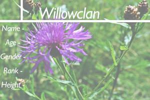 Willowclan Application