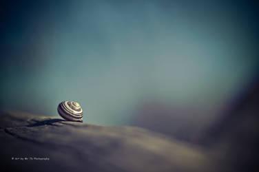 Snail Shell (Re-work)