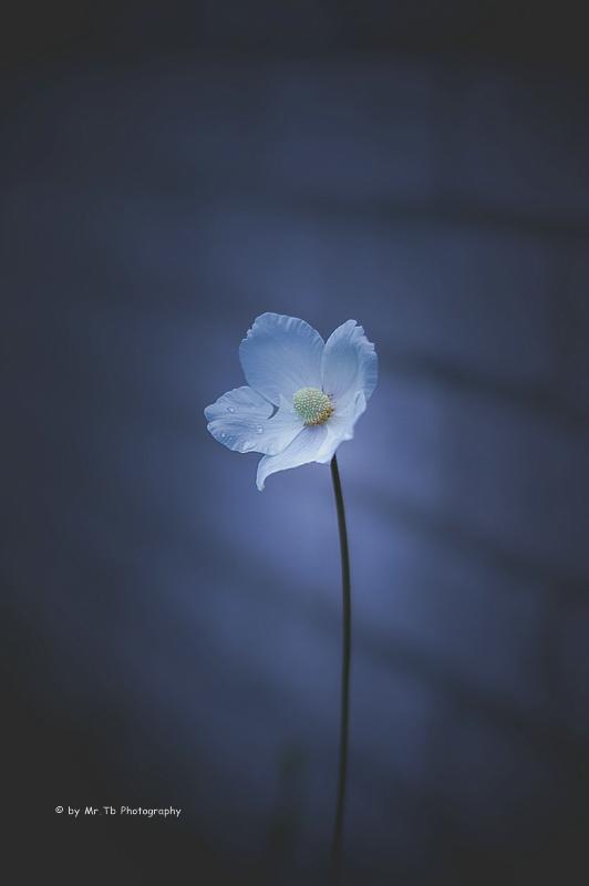 Shine on you III by Tb--Photography