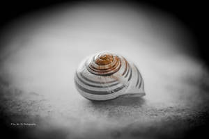 Snail Shell (Glow-Effect) by Tb--Photography