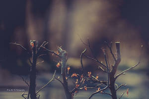 Branches by Tb--Photography