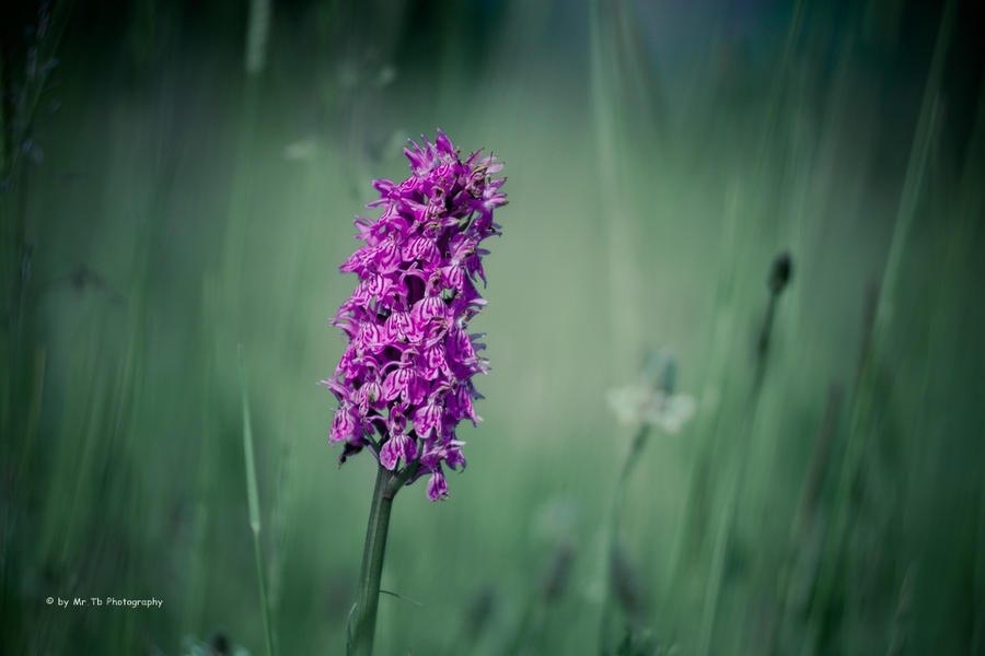 Die Farbe Lila by Tb--Photography