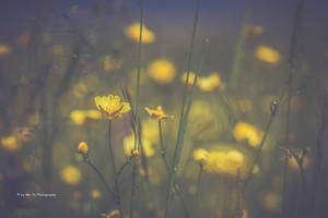 Yellow Shine by Tb--Photography