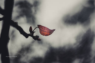 Flying in to the bokeh by Tb--Photography