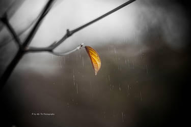 Rainy Days by Tb--Photography