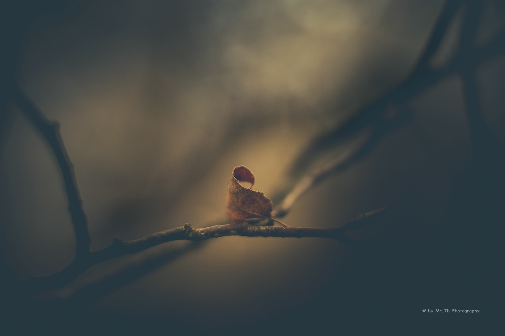 a Leaf by Tb--Photography