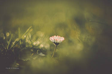Spring by Tb--Photography