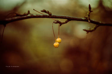 Orange Pearls by Tb--Photography