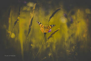 Lepidoptera Schmetterling | 2 by Tb--Photography
