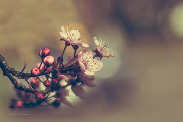 Blossom (Redscale XR) by Tb--Photography